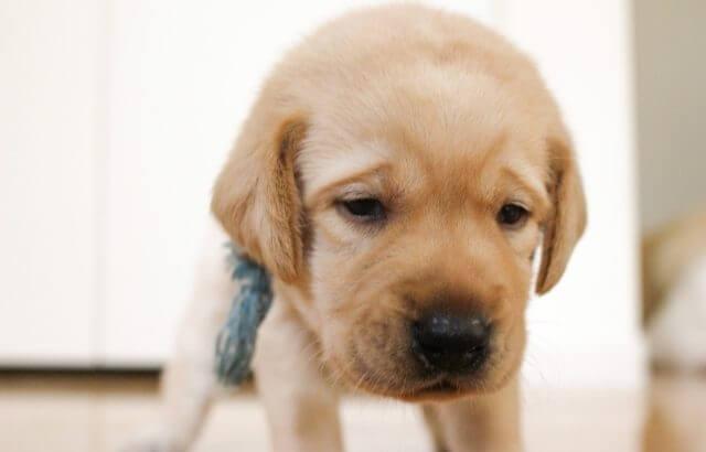 愛犬と楽しく暮らすためには、ご近所トラブルを未然に防ぐことが大切です