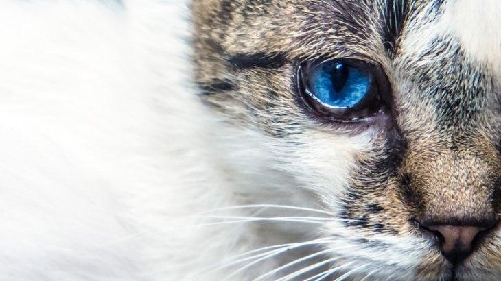 愛猫の定期的な通院が長生きの秘訣!