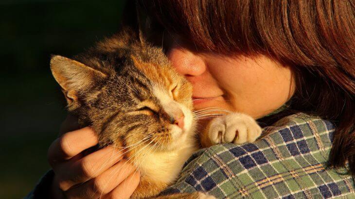 コツを覚えれば簡単!猫と仲良しになる付き合い方