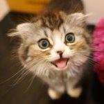 愛猫のウンチチェックで体調管理
