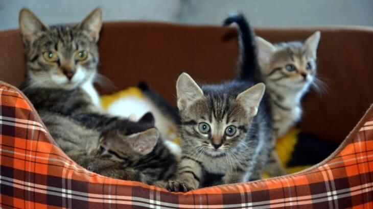 初めて飼う人におすすめ!猫を選ぶ際のポイントと猫種ランキング