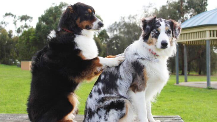 犬の多頭飼育を上手にする方法