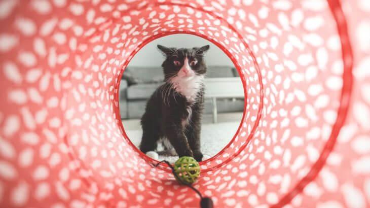 猫が喜ぶ暮らしを!遊びに必要なおもちゃと部屋のポイント