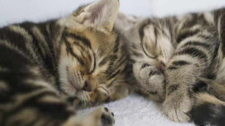 寄り添って眠る姿を見たい! 猫の多頭飼育を成功させるには