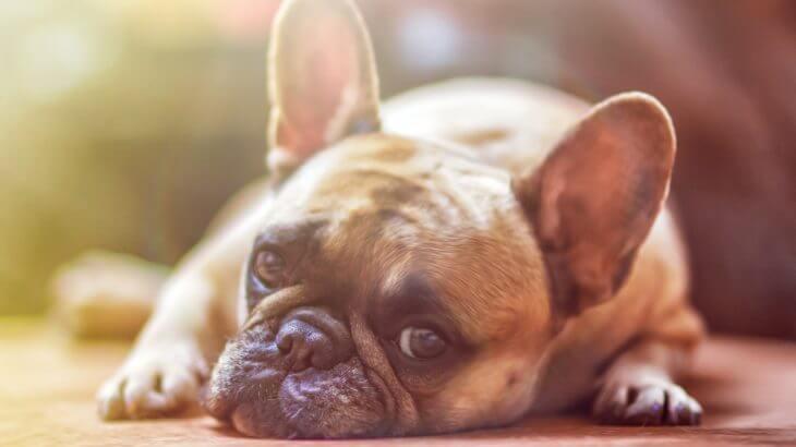 この症状はいったい?犬の病気の症状と初期対応