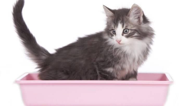 猫とトイレのしつけのコツ。失敗するときは原因がある!