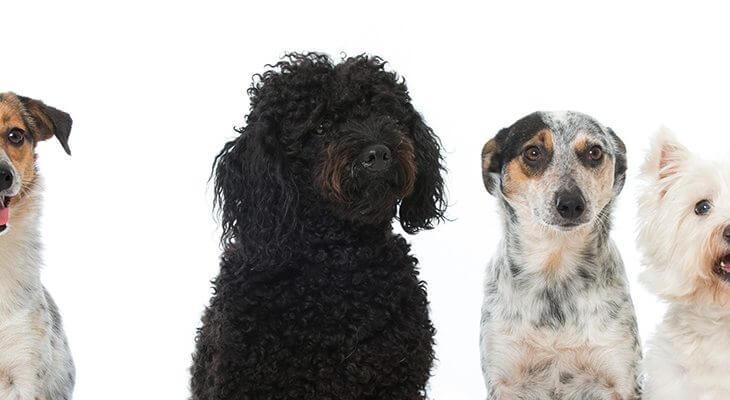 あなたに合うのはどの犬種?人気の犬種の特徴や性格をご紹介