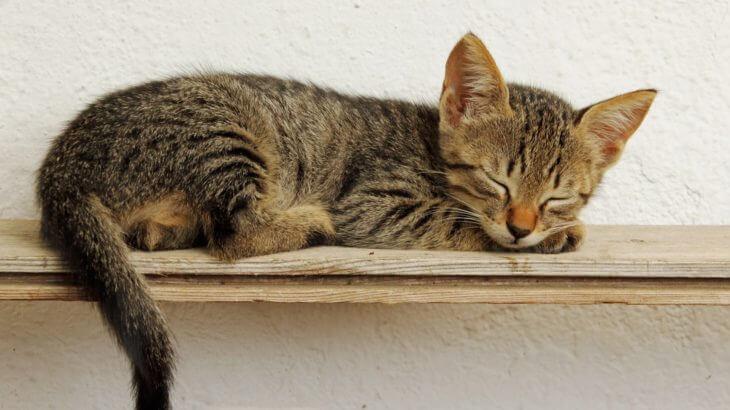 猫を初めて飼うときに知っておきたい!不安や困ったことへの対処法
