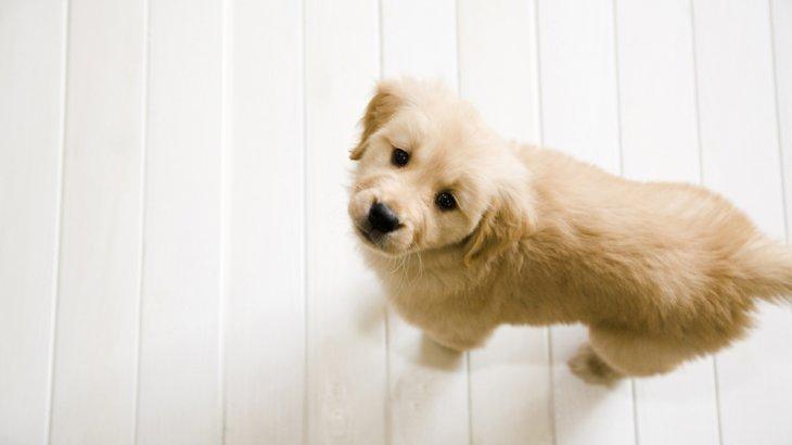 知らないと命に関わることも!知っておくべき犬の病気と正しい予防策
