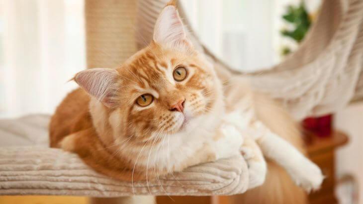 老猫と生きるために知っておきたいこと
