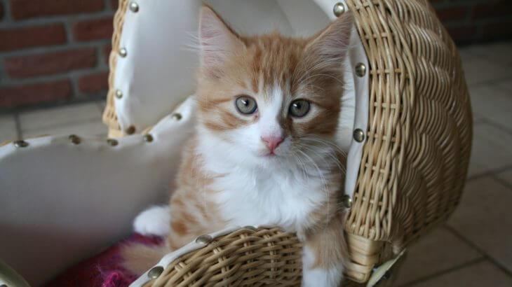 生後1週間の子猫を飼い始めるときの注意点