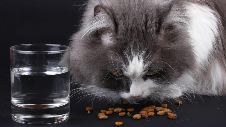 猫が食べものを吐いた!考えられる病気と症状について