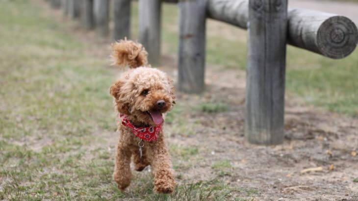 人気犬種ランキング上位の犬は初めて飼うのにおすすめ?