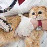 猫の感染症予防にはワクチン接種