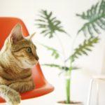 猫にストレスは大敵! 猫と一緒に楽しく暮らす飼育方法