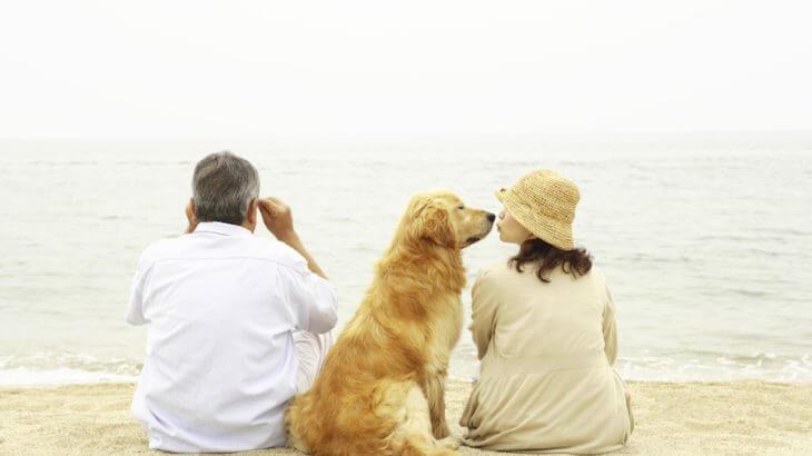 愛するペットの死と向き合うとき、心に留めておきたい5つのこと