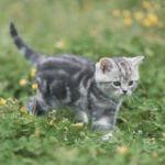 人気の猫種やそれぞれの性格は? 猫の知識を深めよう