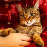 意外と知らない猫の豆知識!猫の能力を知る雑学のススメ