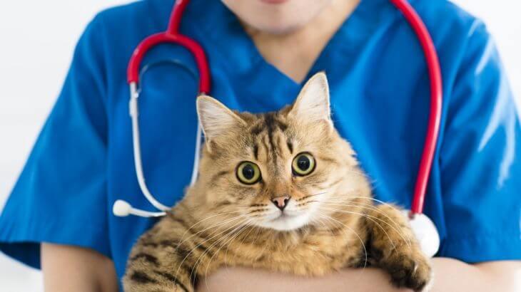 猫が病院を嫌がるのは当たり前!ストレスの軽減法と病院の探し方