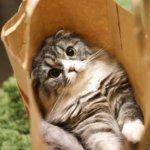 初めて猫を飼う時に知っておきたい、猫の食事、生活全般、動物病院、ペット保険