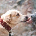 犬と仲良くなるコツは犬の気持ちを知ることです